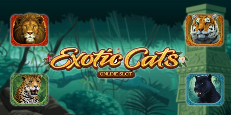 slot med katter hos www.svenskakasinon.se