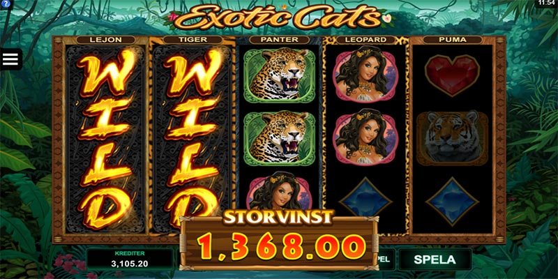 Vinn storvinst hos exotic cats